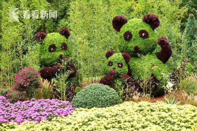上海菊花展在共青森林公园进行 为市民打造赏菊胜地