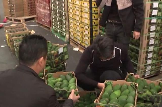 疯狂的新水果之王牛油果:七年进口量增长上千倍