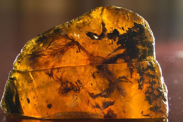 古生物学家发现一亿年前首批三维保存古鸟类尾羽琥珀