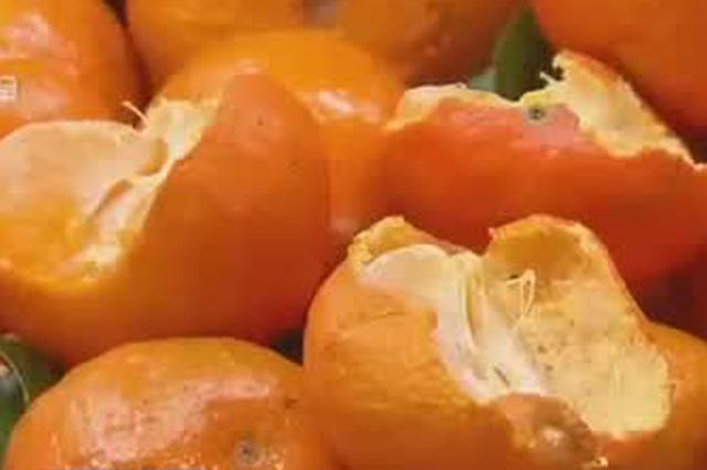 10年前水果贵族沙糖桔身价暴跌 曾相当于进口水果