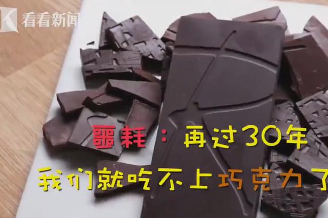 30年后可能吃不到巧克力了!全球变暖或让可可树灭绝