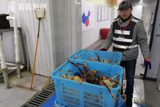 俄罗斯50余吨活帝王蟹运抵上海 国际贸易海运干线成型