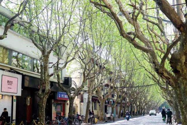 上海即将出台全国首份街道设计标准 北横通道率先试点