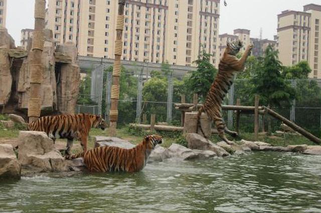 浦东航头曾是丹顶鹤栖息地 老虎豹猫均是上海乡土动物