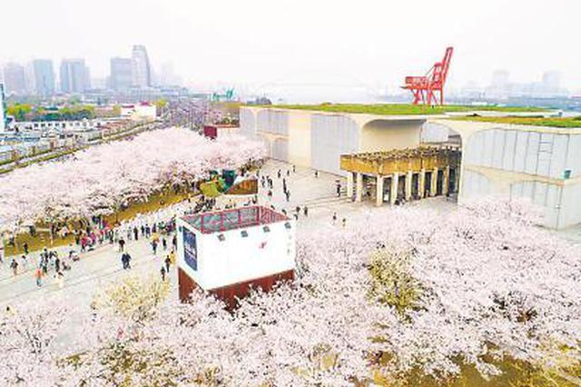 上海西岸龙腾大道已成为美术馆大道 赏樱看展成网红地