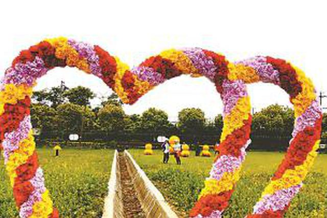 宝山月浦花艺展揭幕 现场展示100多种50万盆花草植物