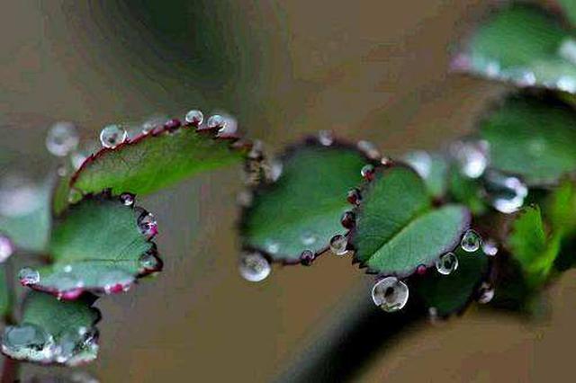 5月1日至12日申城零降水创记载 本周阴雨气象居多