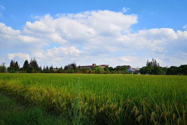 上海集体土地房屋征收评估新规 首次算入室内装修价值