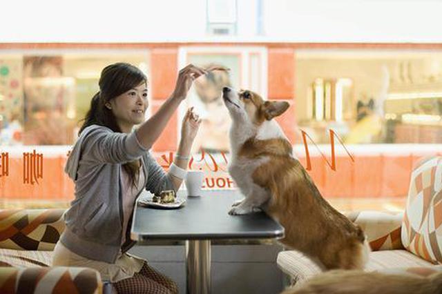 上海宠物友爱餐厅难觅 雇主抱怨:原因不在宠物而在人