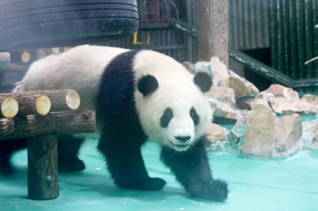 室内动物园成商场经营新业态 消费者评价喜忧参半