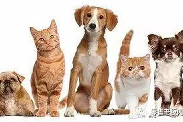 上海一白领两年为宠物犬花费达5万元 云豢养走俏收集