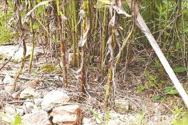 奉贤灯塔村42亩耕地因堆埋建筑垃圾 长达9年无法耕种