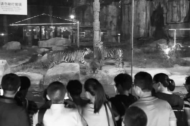 上海动物园打造国内首个特点夜间项目 周四与市平易近会晤