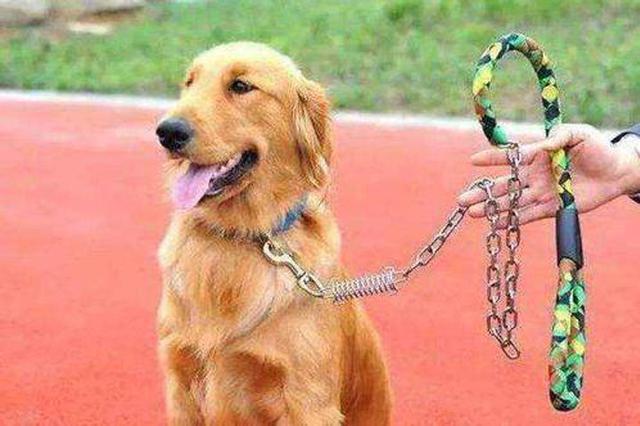 上海加大处罚违法违规养犬行为 线上线下均可办理犬证