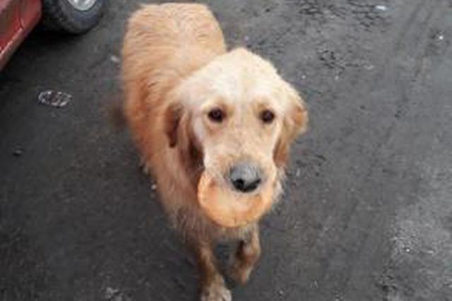 沪收容流浪犬1.2万多只 违法遛狗或纳入个人征信记录