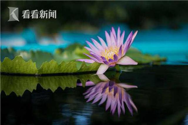 中秋国庆接踵而至 申城公园9月活动精彩纷呈