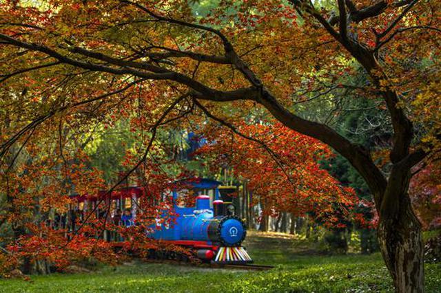 上海旅游节即将开幕 共青森林公园实行门票半价优惠