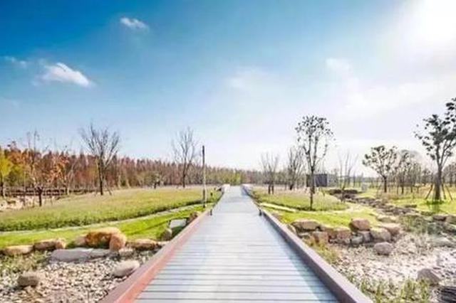 临港首座海绵公园开园成打卡地标 可自立接收消纳降雨