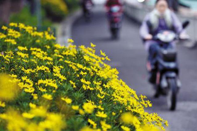 上海今起至月底将迎好气象 30号最低气温或创本年新低