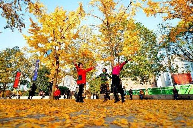 上海42条门路将陆续实施落叶不扫政策 比客岁新增15条