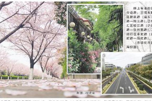 申城新一批11条绿化特色道路公示 过半进入最佳观赏期
