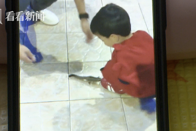 2岁半幼童昆虫馆疑遭抓伤 涉事动物未打疫苗