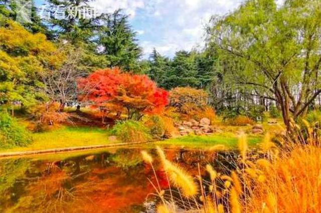 申城大雪时节层林尽染 五彩森林美景呈现