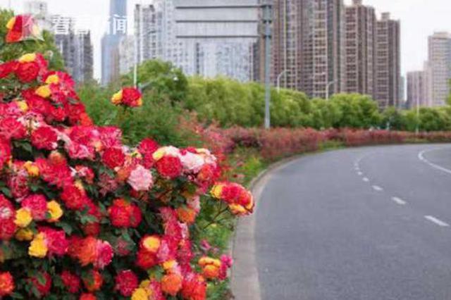 上海新增11条绿化特色道路 提前完成十三五规划