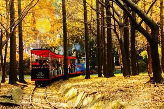 沪共青森林公园色叶景观遍布园区 最佳观赏期近20天