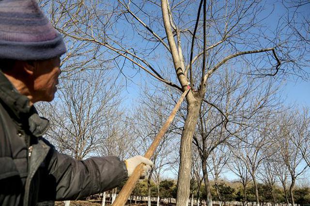 市民反映小区树木遭过度修剪仅剩树桩 系施工队违规施工