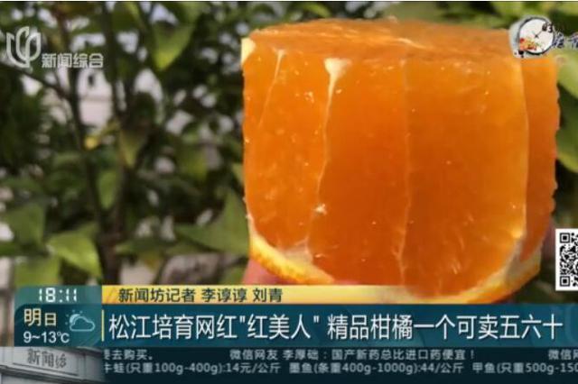 松江培养网红柑橘红丽人 精品柑橘一个可卖五六十