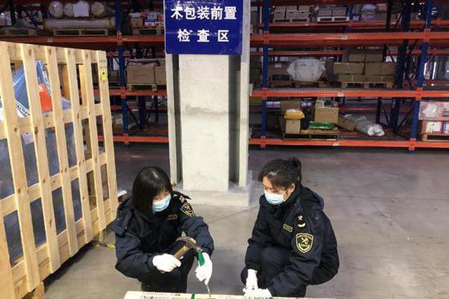 上海海关首次截获检疫性有害生物异胫长小蠹属