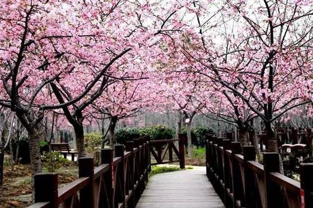 沪各公园踏青赏花人流不息 园方到游客防控意识不放松