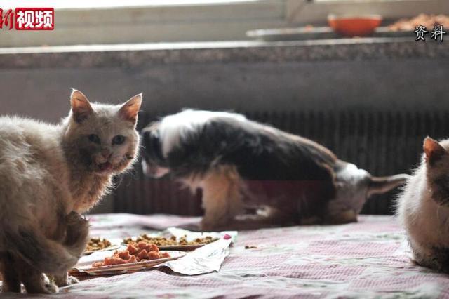 上海一夫妻把房让给66只猫住后续:减至13只 已做绝育