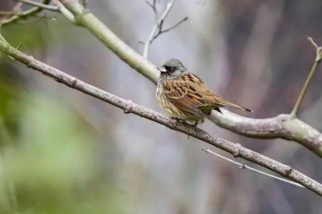 青浦全区域划定为野生动物禁猎区 上海已有五个禁猎区