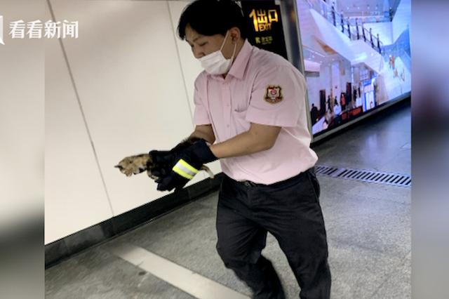 小奶猫窜进地铁站 暖心驱离被抓伤他却说值得