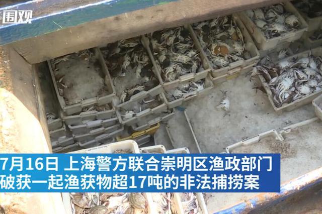 上海查获非法捕捞梭子蟹17吨 5人被刑拘
