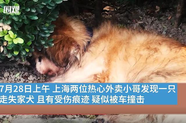 上海首例养犬人遗弃犬只案:罚五百元并吊销犬证