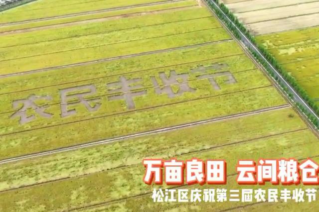 松江今年预计产粮约9万吨:占据重头的中晚熟稻长势良好