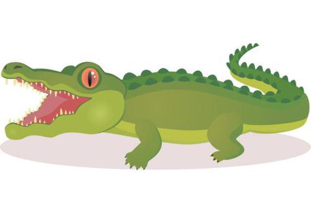 居民楼里惊现凶猛小鳄鱼 经查是濒危保护动物暹罗鳄