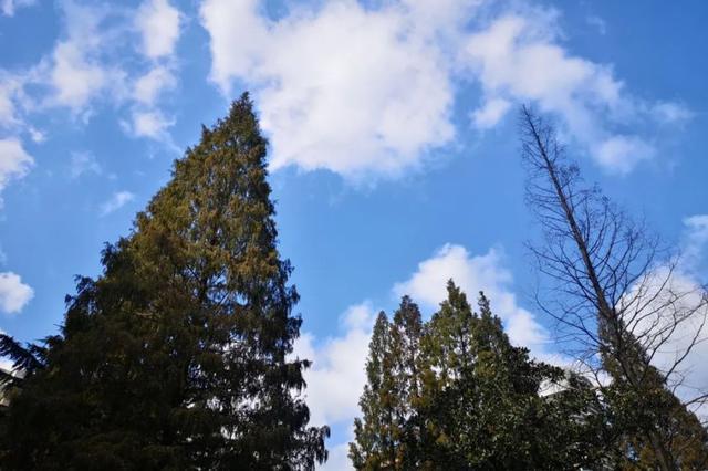 申城晴燥天气格局将被打破 18日至19日将迎较明显降水