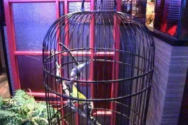 徐汇百联查厘士餐厅现老鼠 市场监管局调查餐厅已