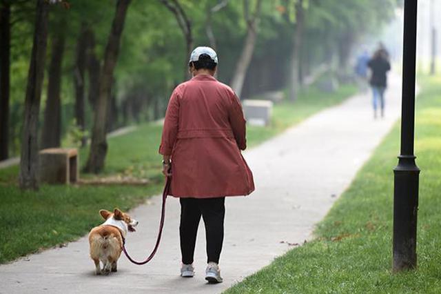 民建上海市委建言文明养犬:适时推出养犬证计分制度