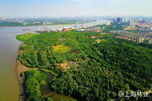 上海市森林覆蓋率再度提高 5年增加3.5個百分點