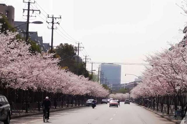 上海这5条路段将开启落花不扫模式 详细名单一览