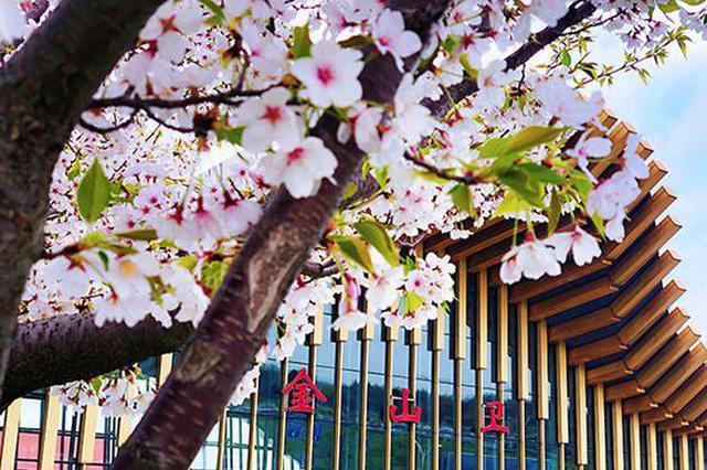 上海金山铁路迎春游黄金季 客流恢复至疫情前近九成