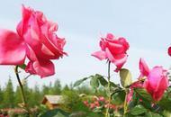6月魔都公园花展活动