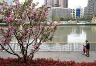 上海今年建百个美丽街区