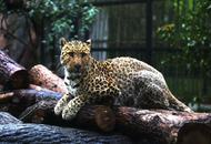 上海动物园推乡土动物展区