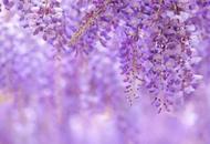 """嘉定""""紫云廊"""""""